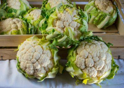 broccoli Ortofrutta Candela | Azienda ortofrutticola a Loconia - Canosa di Puglia